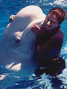 Beluga whale hugging in San Antonio.